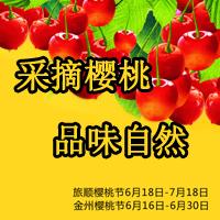 采摘樱桃 品味自然