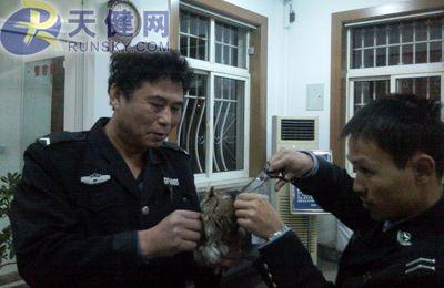 民警小心翼翼剪掉缠在猫头鹰身上的渔网线